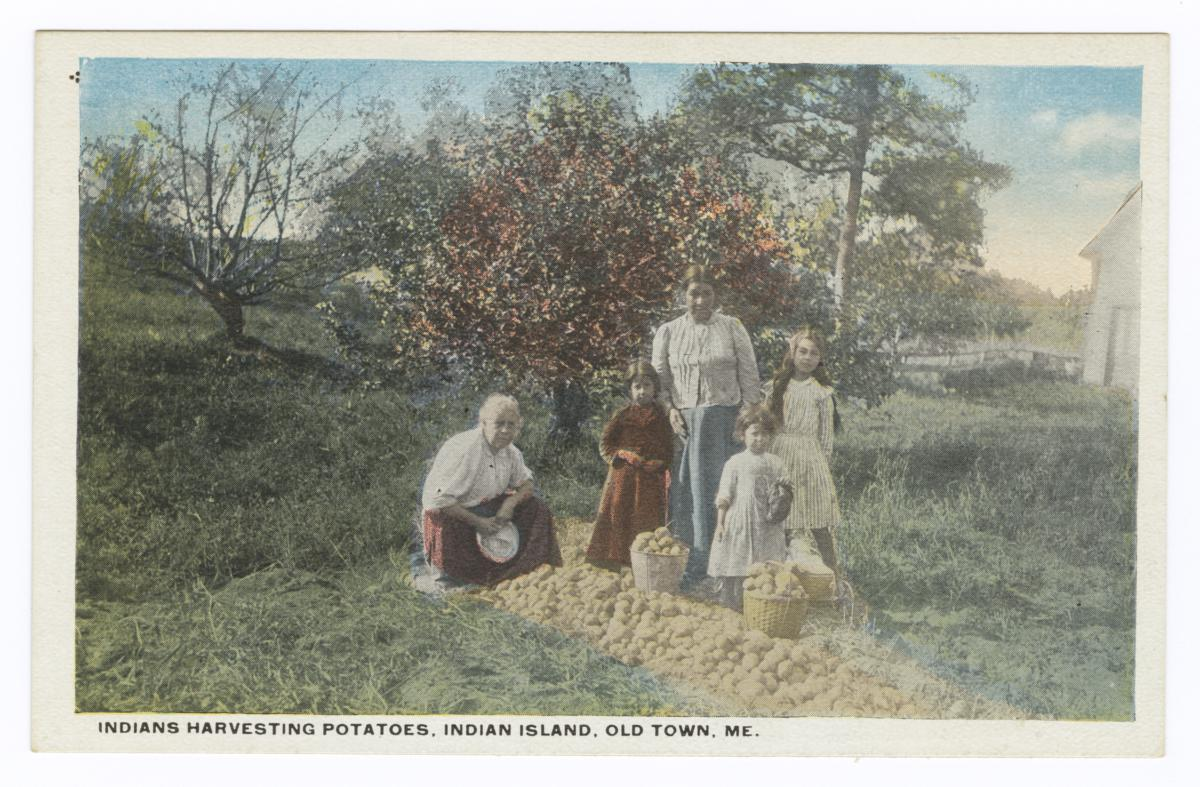 Indians Harvesting Potatoes, Indian Island, Old Town, Maine