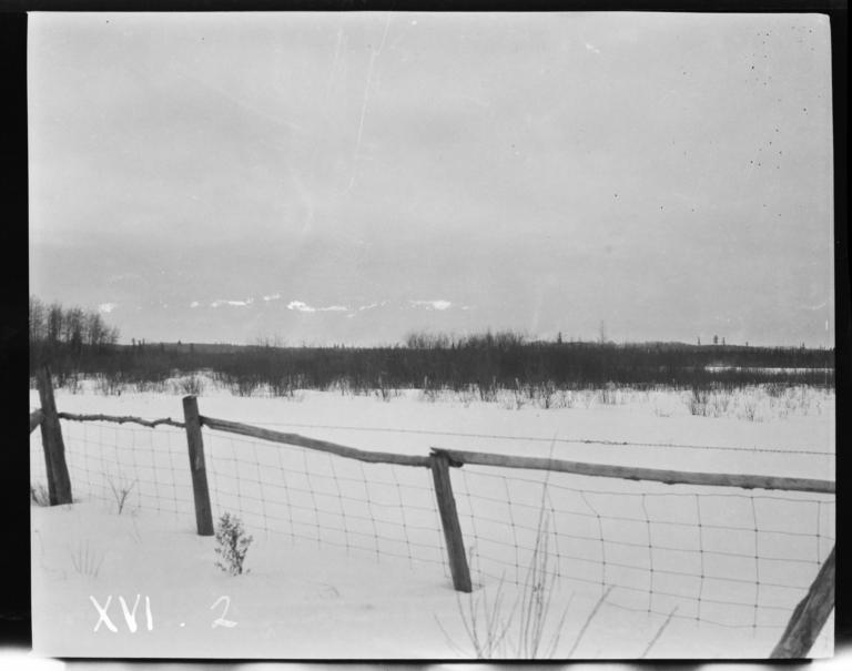 Landscape, Orr, Minnesota