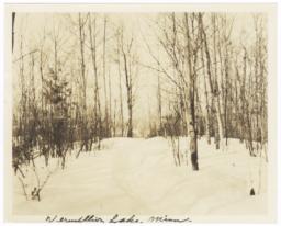Trees at Vermilion Lake, Minnesota