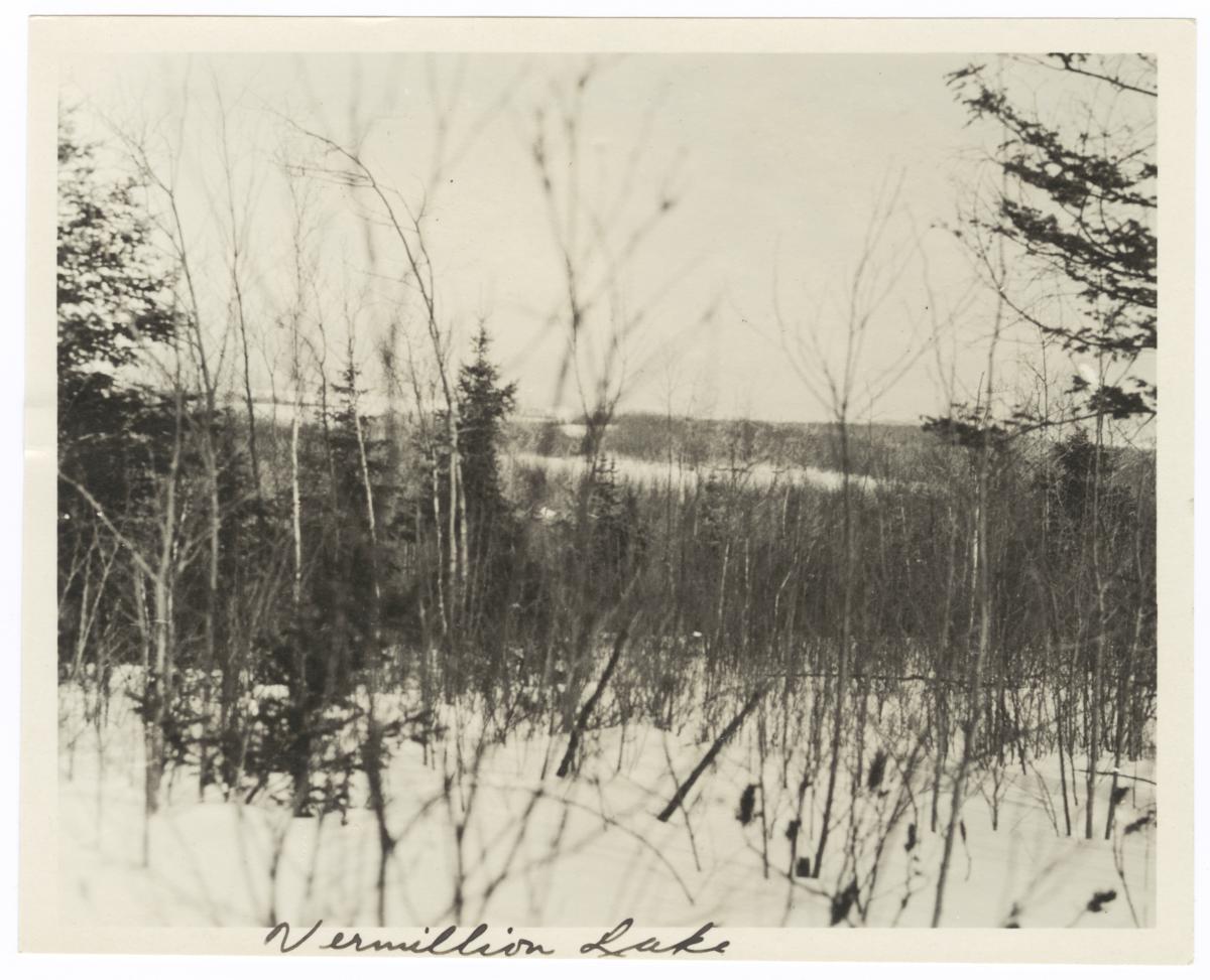 Trees around Vermilion Lake, Minnesota