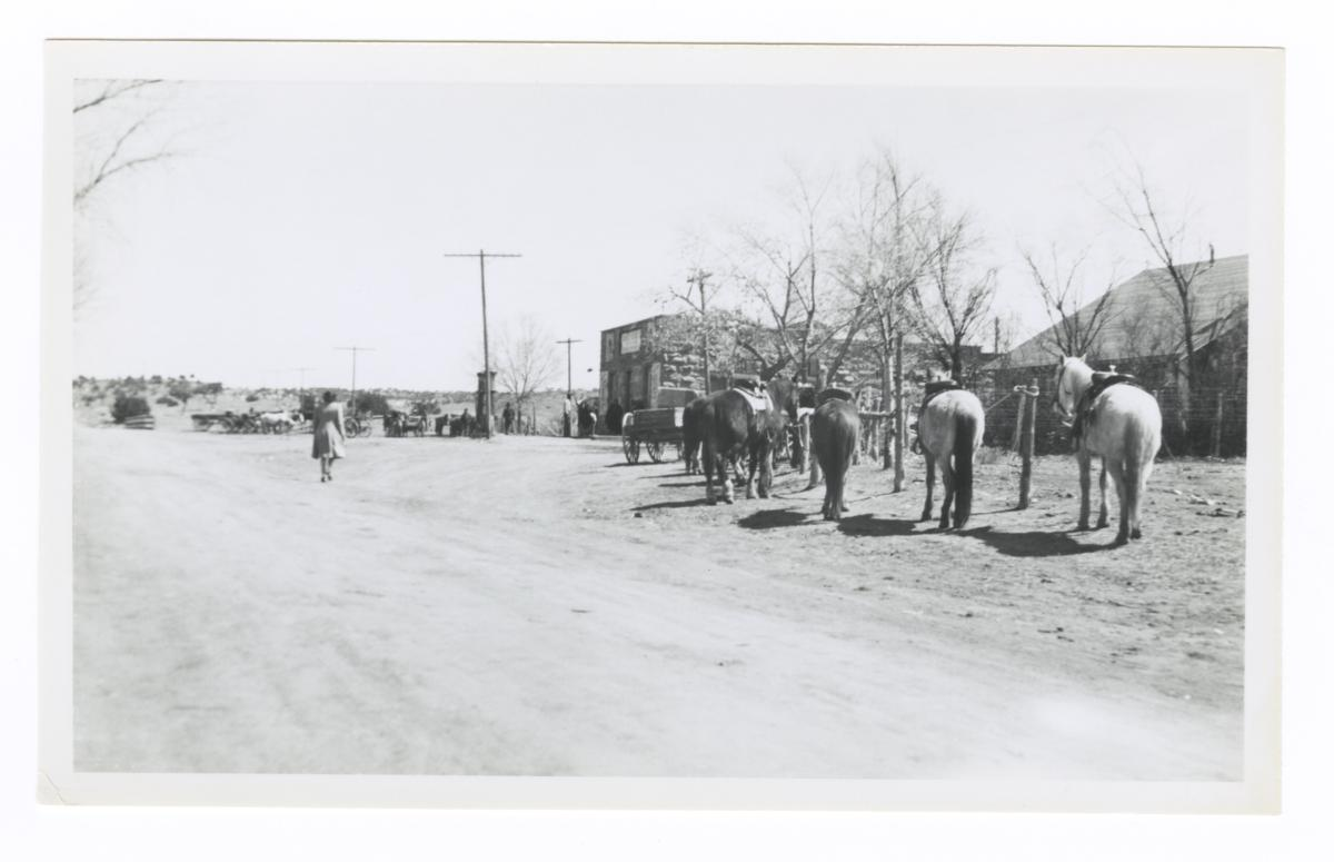 View of Road and Horses