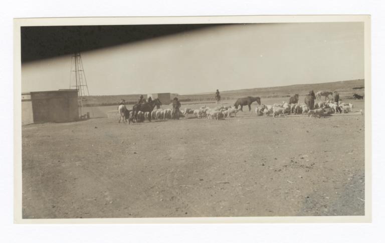 Sheep on Navajo Reservation