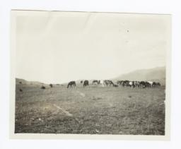Round-up, Mescalero, New Mexico