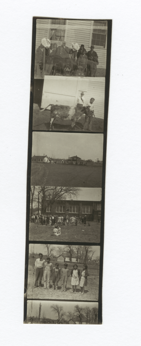 Contact Strip of 5 Images of People, Houses or Farm Animals