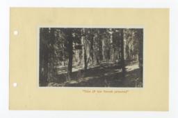 Oregon Forest Area, Klamath, Oregon