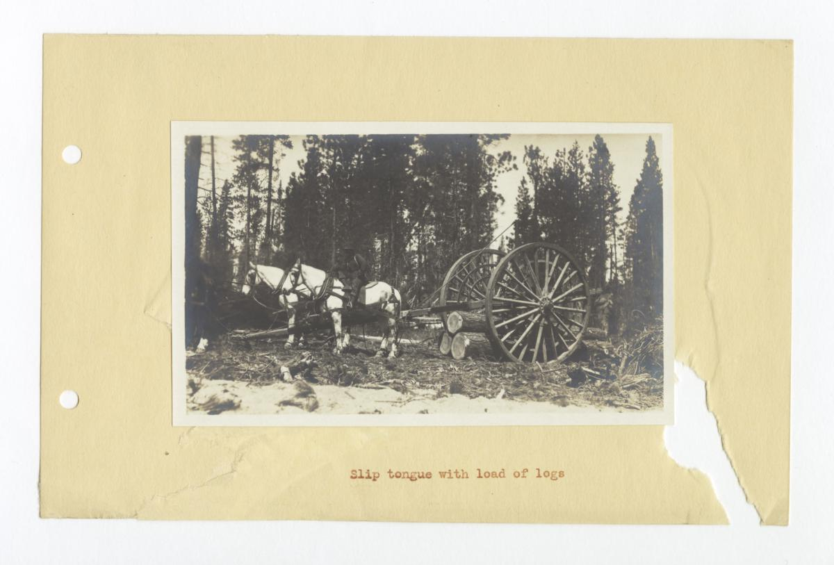 Slip Tongue Wheels with a Load of Logs, Oregon