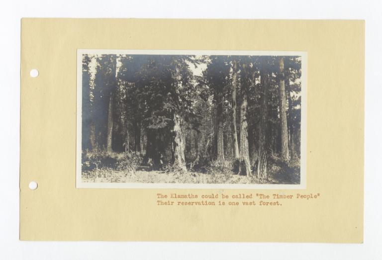 View of the Klamath Forest, Oregon