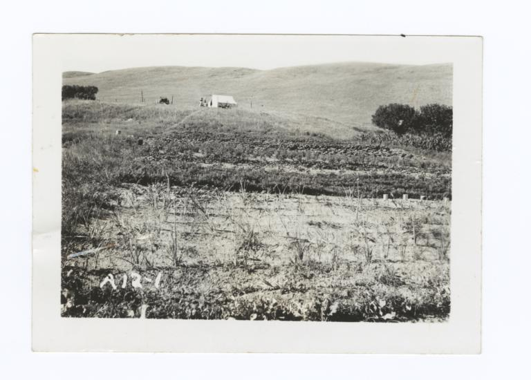 Eagle Man's Garden, Field with Car and Building in Background, Rosebud Reservation, South Dakota