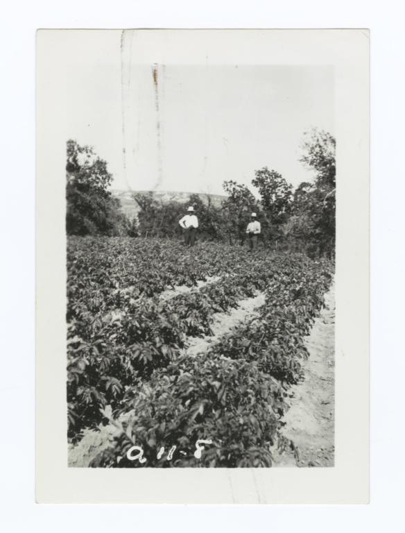 Garden of Charles Marshall, Rosebud Reservation