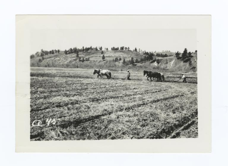 Two Teams of Horses Plowing a Field, Rosebud Reservation, South Dakota