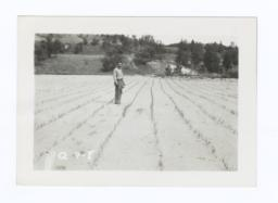 Man Standing in the Community Garden's Onion Patch, Rosebud Reservation, South Dakota
