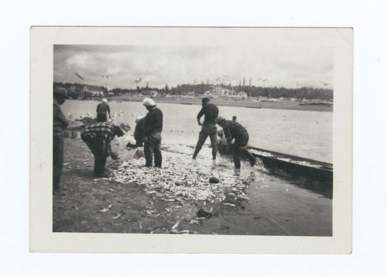 Quilyute Indians Smelt Fishing, Puget Sound, Washington