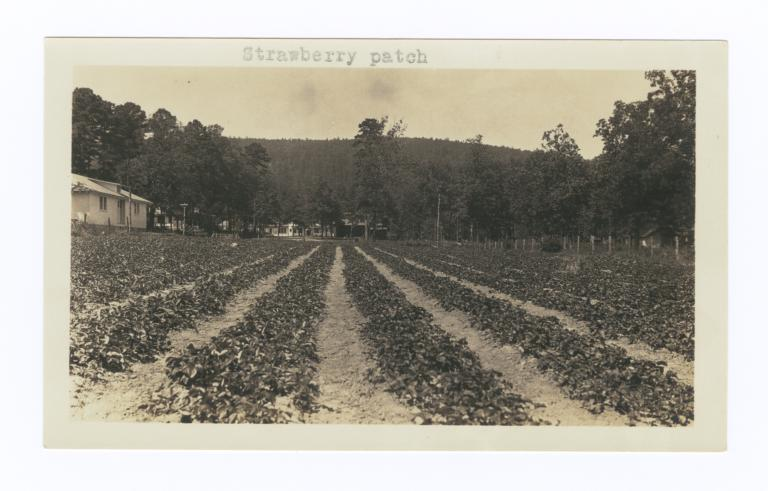 Strawberry Patch, Oklahoma