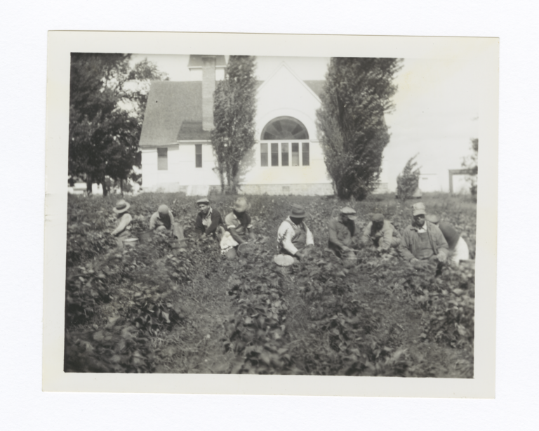 "Harvesting the ""Lord's Acre"", Oneida Methodist Mission"