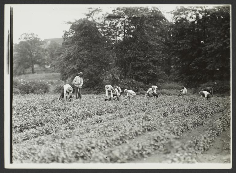 Men Working in Field