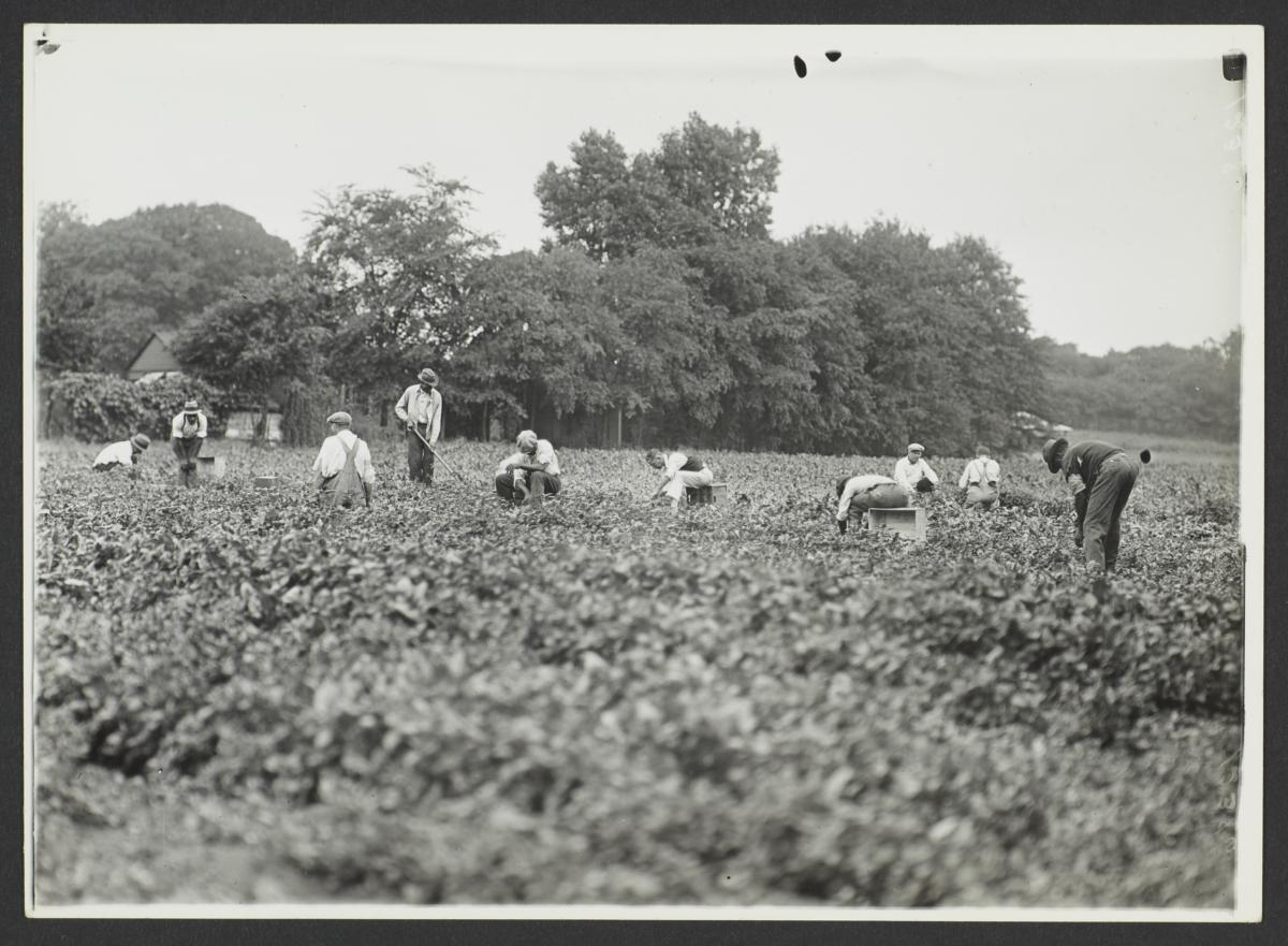 Ten Men Working in Field