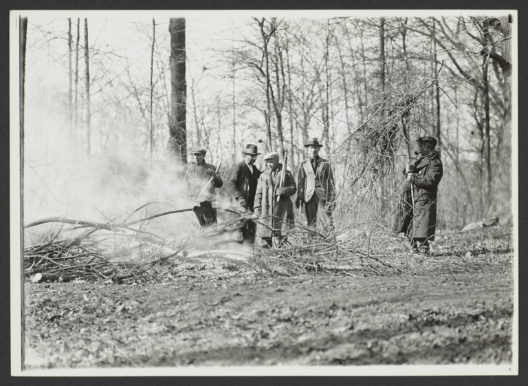 Men Burning Tree Limbs